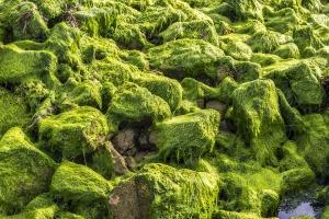 algae_audio